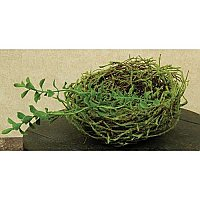 Vine Bird Nest with Moss